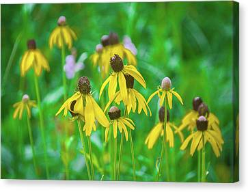 Canvas Print featuring the photograph Wildflowers Of Yellow by Bill Pevlor