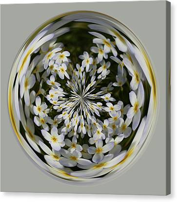 Canvas Print featuring the photograph Wildflowers Orb by Bill Barber