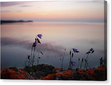 Canvas Print featuring the photograph Wildflowers Over Lake Superior by Jane Melgaard