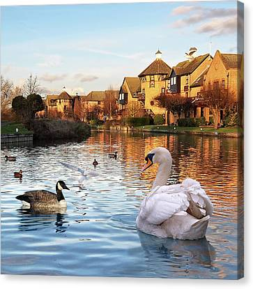 Wildlife On The River Square Canvas Print