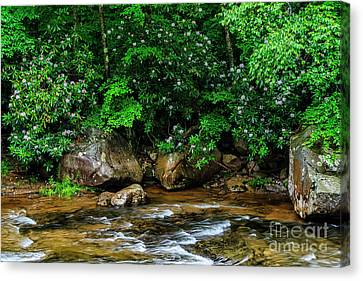 Williams River And Rhododdendron Canvas Print