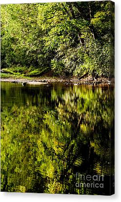 Williams River Summer  Canvas Print