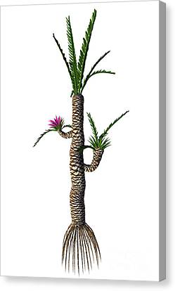 Williamsonia Gigas Tree Canvas Print