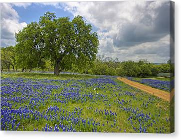 Willow City Loop 6 Canvas Print by Paul Huchton
