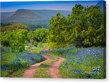 Willow City Road Canvas Print