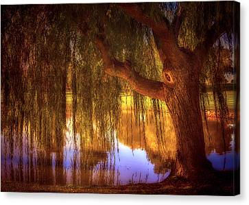 Willow Glow Canvas Print