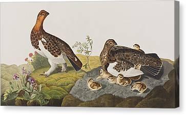 Willow Grouse Or Large Ptarmigan Canvas Print by John James Audubon
