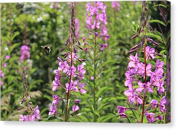Willow Herb Canvas Print by Martin Newman