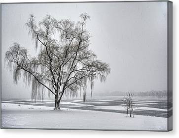 Willow In Blizzard Canvas Print