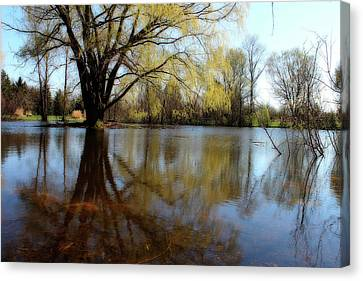 Willow Island Canvas Print by Scott Hovind