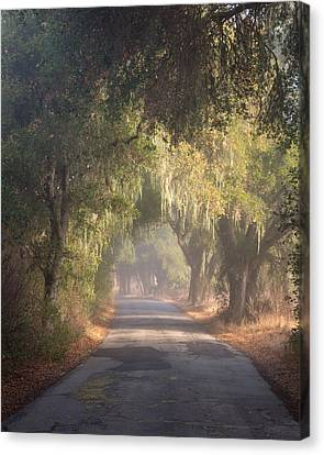 Willow Road Canvas Print by Joseph Smith