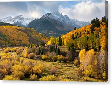 Willow Swamp Canvas Print by Steve Stuller