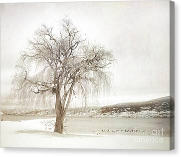 Willow Tree In Winter Canvas Print by Tara Turner