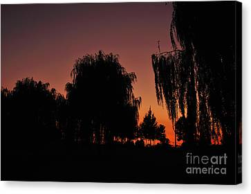 Willow Tree Silhouettes Canvas Print