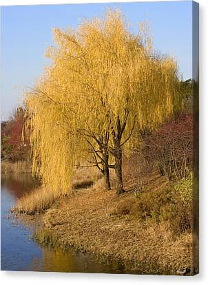 Willow Trees By The Lake Canvas Print