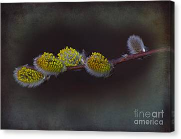 Willows Of April Canvas Print by The Stone Age
