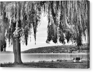 Willows Of Lake Cayuga Canvas Print by Jessica Jenney