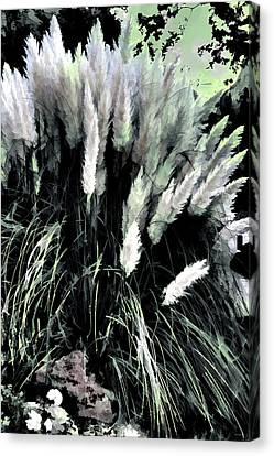 Willows Canvas Print by Tom Prendergast