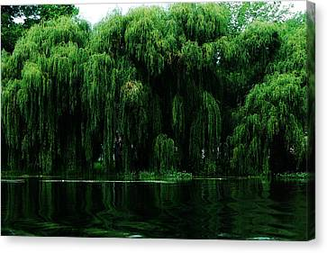 Willows Weeping Canvas Print