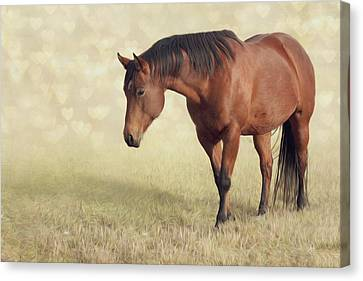 Wilma Canvas Print by Debby Herold