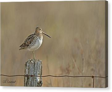 Wilson's Snipe On A Post Canvas Print