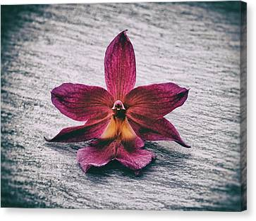 Wilting Orchid  Canvas Print