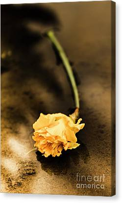 Aging Canvas Print - Wilting Puddle Flower by Jorgo Photography - Wall Art Gallery