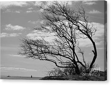 Wind Blown Canvas Print by Catherine Reusch Daley
