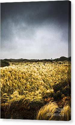 Turbulent Skies Canvas Print - Wind Blown Grassland  by Jorgo Photography - Wall Art Gallery