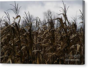 Cornfield Canvas Print - Wind Blown by Linda Shafer