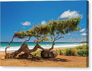 At Sea Canvas Print - Wind Blown Tree by Brian Harig