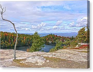 Wind Blown Tree In Autumn Canvas Print