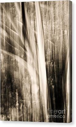 Wind Canvas Print by Emilio Lovisa