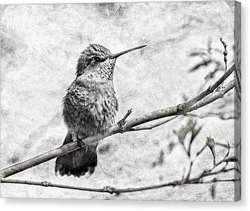 Canvas Print featuring the photograph Wind In Her Feathers by Angie Vogel