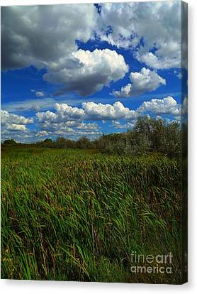 Wind In The Cattails Canvas Print by Annie Gibbons