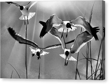 Canvas Print featuring the photograph Wind Swept Bw by Jan Amiss Photography