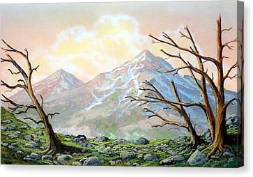 Windblown Canvas Print by Frank Wilson