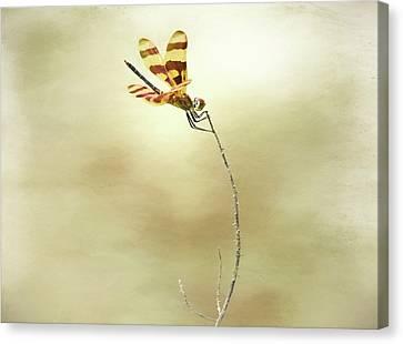 Windblown Canvas Print by Steven Michael