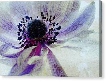Windflower Canvas Print by AugenWerk Susann Serfezi
