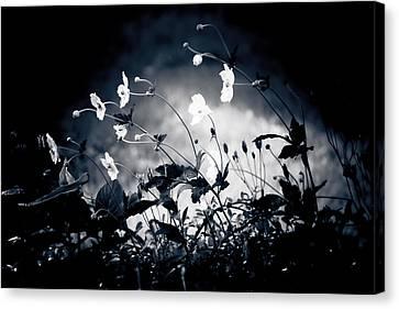 Windflowers  Canvas Print by Maggie Terlecki