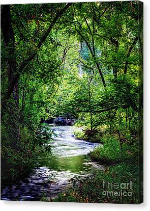 Winding Creek At Chickasaw National Recreation Area In Vertical Canvas Print by Tamyra Ayles