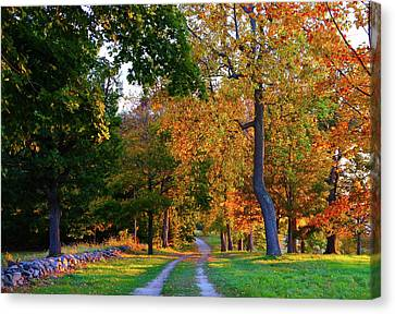 Winding Road In Autumn Canvas Print