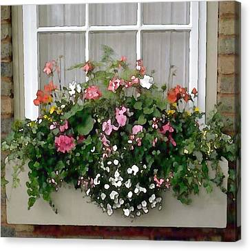 Window Box Of Mixed Flowers Canvas Print by Elaine Plesser