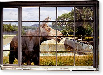 Canvas Print featuring the photograph Window - Moosehead Lake by Peter J Sucy