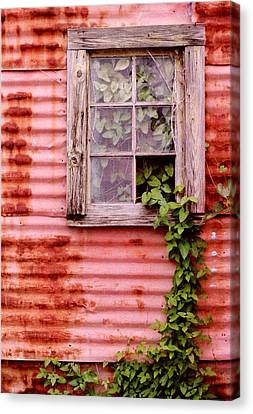 Window Of Ivy Canvas Print