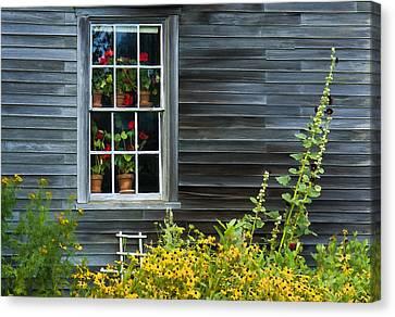 Window Of Olson House Canvas Print