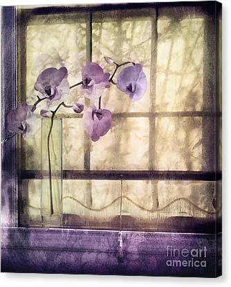 Window Orchids Canvas Print