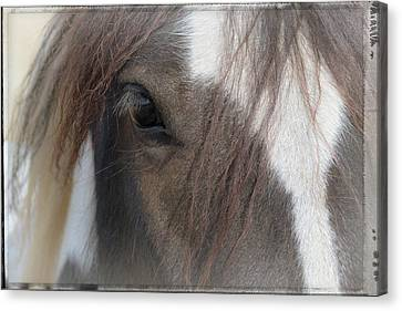 Window To A Horse's Soul Canvas Print by Mick Anderson