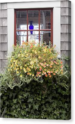 Windowbox - Nantucket Canvas Print