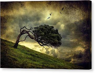 Winds Of Change Canvas Print by Peter Elgar